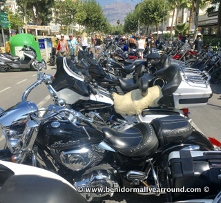 Row of Harleys